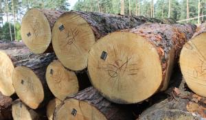 В Карелии планируют начать пилотный проект по маркировке древесины